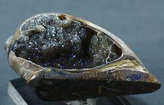 Iridescent Drusy Quartz-lined Fossil Gastropod by BandLMinerals