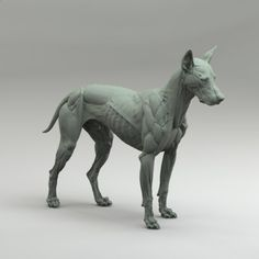Canine Anatomy Study, steve lord