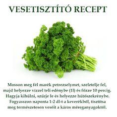 Életmód cikkek : Egészségünkért Parsley, Healthy Lifestyle, The Cure, Vitamins, Medical, Herbs, Detox, Gardening, Medicine
