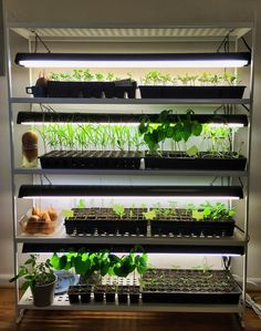 Starting seeds indoors has never been easier since I built this diy seed starting rack with plant grow lights perfect for getting a head start on the season