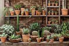 Bastante resistente ao sol, cactos, suculentas e agaves sobrevivem em qualquer espaço da sua casa. Veja como cuidar dessas plantas!