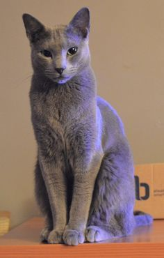 Gera owns a Russian blue cat called Frina. Jossie swears that she's planning world domination.
