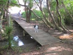 Macleans Park - great for dog walks, Auckland, New Zealand