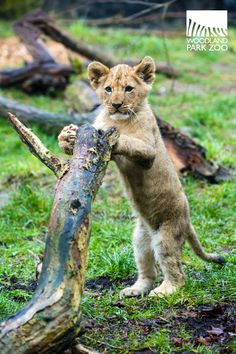 They're getting bigger by the day. Can you believe they're nearly four months old? #namethecubs