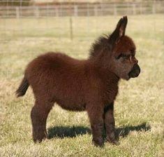 Cute Animals Pictures In Hd. Rainbow Loom Cute Baby Animals if Top Cute Animals List; Cute Baby Animals How To Draw regarding Cute Animals Baby Pandas Baby Donkey, Cute Donkey, Mini Donkey, Donkey Funny, Funny Jump, Donkey Donkey, Funny Farm, Funny Donkey Pictures, Baby Sheep