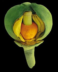 A seed under an electron scanning microscope.