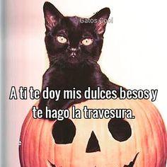 """83 Me gusta, 0 comentarios - Gatos Cool (@gatoscooloficial) en Instagram: """"Piénsalo . . . . #memesdegatoscool #gatos_cool #gatoscool😸 #halloween #halloweenideas…"""""""