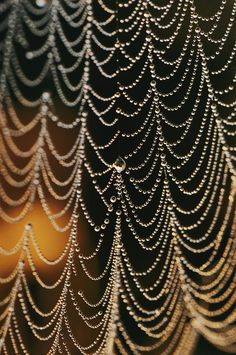 An Orb-weaver spider web in the early morning dew