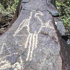 Macaw petroglyph at Petroglyph National Monument, Albuquerque, NM, made by Southwest Native Americans ca. 1300-1600