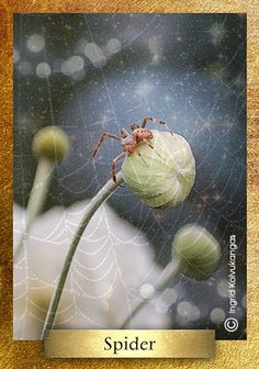 In Hopi legends Spider is goddess of Earth and to the Cherokee Grandmother Spider brought light to the world. Native American Art, American Indians, Cherokee Tribe, Astro Tarot, Spiritual Animal, Dance Dreams, Dream Meanings, Dream Interpretation, Animal Totems