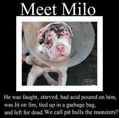 sad - Against Animal Cruelty!