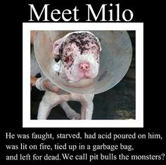 Milo did nothing. It was his owner who is the real monster