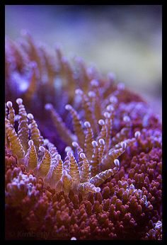 Very very macro image of coral by Kimberly Clark . She has some amazing pictures!