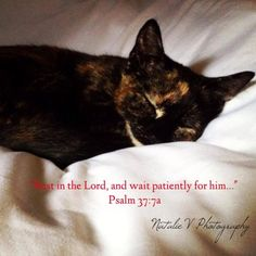 #Psalm37 #Psalms #NatalieVPhotography #Bible #HolyBible #kitten #sleep #peace Psalm 37, Rest In The Lord, Encouraging Bible Verses, Encouragement, Kitten, Sleep, Peace, Cats, Animals