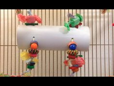 DIY: Bird Play Tunnel  cute with green pvc