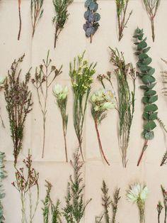 Australian Native Flowers | lauraimurray.com