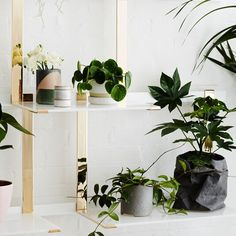 Art & Objects - Meanwhile in Melbourne Recent Discoveries, The Design Files, Art Object, Muse, Ceramics, Ivy, Farmhouse Decor, Living Room, Instagram