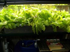 Hydroponics - Do It Yourself - Parts List | Earthineer