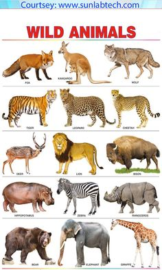 Spectrum pre-school kids learning poster educational wild animals name wall chart Farm Animals List, Wild Animals List, Wild Animals Pictures, Animals Images, Zoo Animals, Animals For Kids, Animals And Pets, Animal Pictures, Learning English For Kids