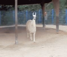 22 Gifs Of Animals Being Sassy