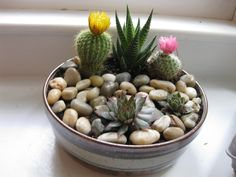 DIY rock garden. Made from thrift shop noodle bowl and plants from Home Depot.