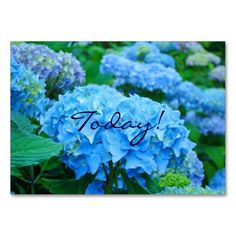 Today! Love One Another! Inspirational Business Cards SOLD Motivational personalized small cards Blue Hydrangea Flowers Business Card