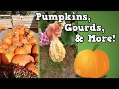 Fall Songs and Videos for Preschool - Pre-K Pages