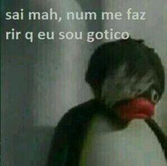Pingu Pingu, Pingu Memes, Foto Meme, Dankest Memes, Funny Memes, Funny Gifs, Funny Cartoons, Cat Memes, Memes Lindos