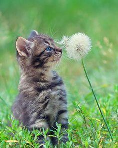 Little kitten ♥️
