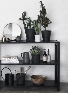 love the black table and cacti