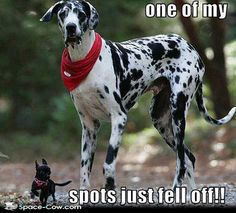 funny animals | Tumblr Great Dane Funny, Pup, Puppys, Puppies