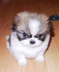 This is sooooooo how i feel this monday grrrrr funny animal quotes, funny animal pictures Funny Animal Jokes, Cute Funny Animals, Animal Memes, Funny Dogs, Animal Quotes, Animal Humor, Animal Captions, Dog Quotes, Funny Looking Animals