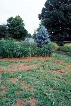 gardensoil