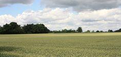 battle of bosworth fieD Bosworth Field, 1485