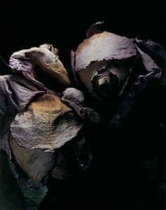 David Sims roses.