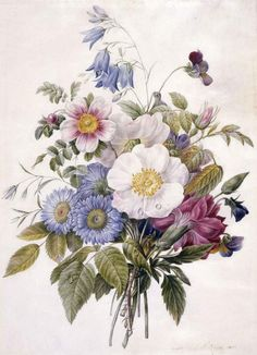 Eugene A. L. d'Orleans, Blue Asters, Rosa Spinosissima hyrbird, Harebell, Violas, Carnation and a Wild Rose, 1820 (source).