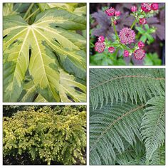 This stylish, but extremely easy to replicate planting combination delivers all-season good looks thanks to the trio of evergreen plants in complementary foliage colors and contrasting textures: Fatsia 'Camouflage', Tsuga canadensis Golden Duchess and Polystichum setiferum. Follow the link to eGardenGo web app for full details.