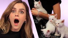 Emma Watson Plays With Kittens (While Answering Fan Questions)