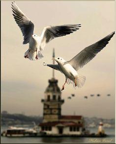 İstanbul, Kız Kulesi ve martılar...