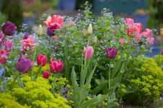 Plants for Borders, Perennials for Borders, Annuals for Borders, Shrubs for Borders, Bulbs for Borders, Flowers for Borders, Roses for Borders, Border Ideas, Plant Combinations