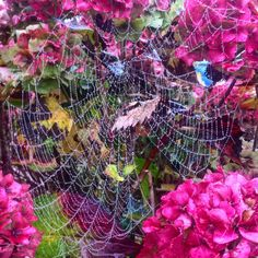 Lucky catch this morning. For me I imagine not so much for the flies #DH #autumn #picoftheday