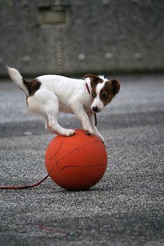Circus dog!