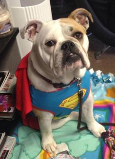 "SuperDog: ""I'll save the world tomorrow ~ today I want to cuddle."""