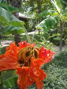 Thai flower