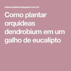 Como plantar orquideas dendrobium em um galho de eucalipto