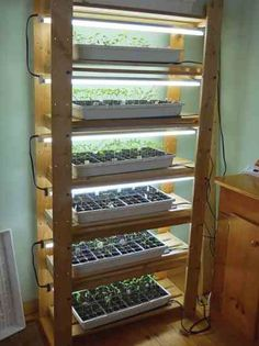 Hydroponic Gardening Seed Starter Shelving Unit - Glean creative ideas for real-world seed-starting setups, from soil blockers to mini-greenhouses, so you can grow your own vegetable seedlings at home this spring. Indoor Vegetable Gardening, Container Gardening, Organic Gardening, Veggie Gardens, Hydroponic Farming, Hydroponic Growing, Agriculture Farming, Hydroponic Vegetables, Indoor Hydroponics