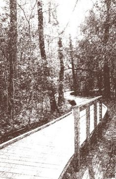 Gulf Coast Botanical Garden at Beauvoir's Environmental Zone.