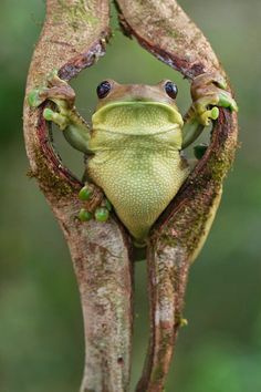 Nature Animals, Animals And Pets, Baby Animals, Funny Animals, Cute Animals, Wild Animals, Funny Frogs, Cute Frogs, Beautiful Creatures