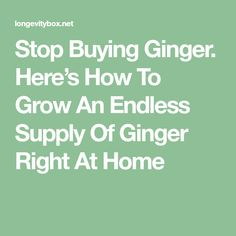 Stop Buying Ginger. Here's How To Grow An Endless Supply Of Ginger Right At Home