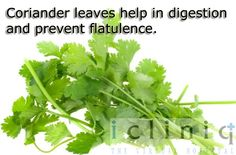 #Coriander leaves #help in digestion and #prevent flatulence.
